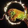 Цирки в Данилове