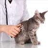 Ветеринарные клиники в Данилове